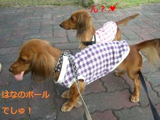 CIMG0643_20101019202007.jpg