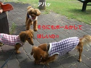 CIMG0654_20101019203113.jpg