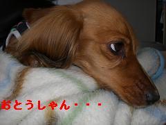 CIMG0663_20100428210528.jpg