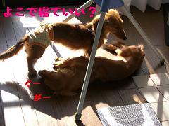 CIMG0670_20100425204124.jpg