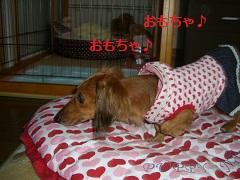 CIMG0692_20101021200335.jpg