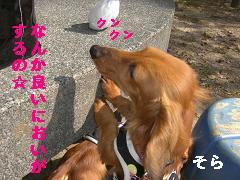 CIMG0694_20100430211641.jpg