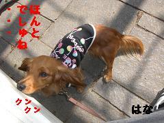 CIMG0697_20100430212023.jpg