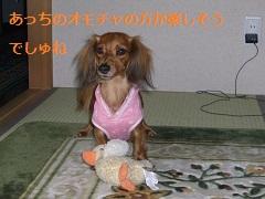CIMG0697_20101021200846.jpg