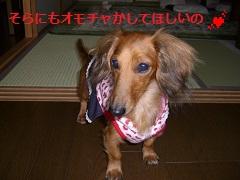 CIMG0698_20101021200904.jpg