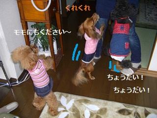 CIMG0712_20101021201804.jpg