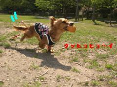 CIMG0740_20100430212947.jpg