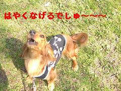 CIMG0744_20100430213004.jpg