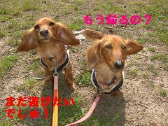 CIMG0762_20100430213808.jpg