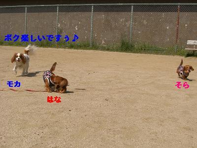 CIMG0784_20100502195455.jpg