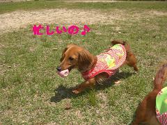 CIMG0809_20100504194924.jpg