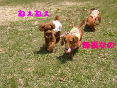 CIMG0814_20100504194946.jpg
