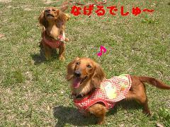 CIMG0815_20100504195000.jpg