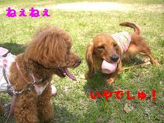 CIMG0824_20100504200155.jpg
