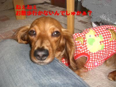 CIMG0841_20100504193613.jpg