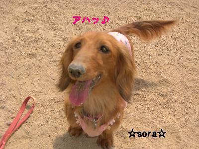CIMG0848_20100505193937.jpg