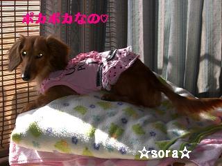 CIMG0851_20100508203626.jpg