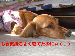 CIMG0853_20100508203933.jpg