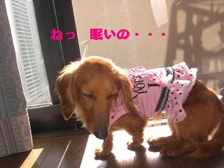CIMG0854_20100508204414.jpg