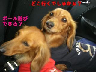 CIMG0890_20100512213234.jpg