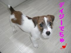 CIMG0936_20100518192254.jpg