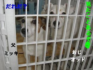 CIMG0942_20100518190142.jpg
