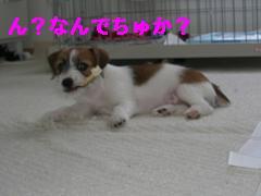 CIMG0946_20100518193024.jpg