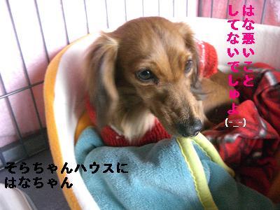CIMG0953_20100205180902.jpg