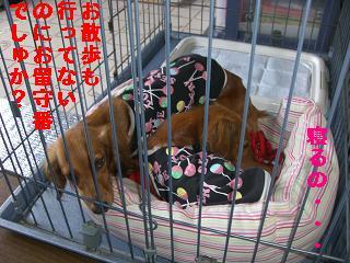 CIMG0961_20100520195719.jpg
