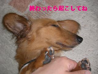 CIMG0966.jpg