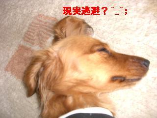 CIMG0970_20100520202206.jpg