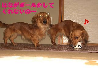 CIMG1003_20100523213352.jpg