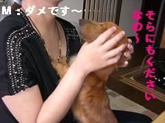 CIMG1006_20100523213556.jpg