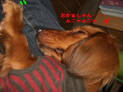 CIMG1010_20100126184429.jpg