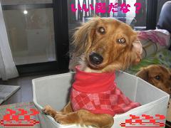 CIMG1014_20100126184803.jpg