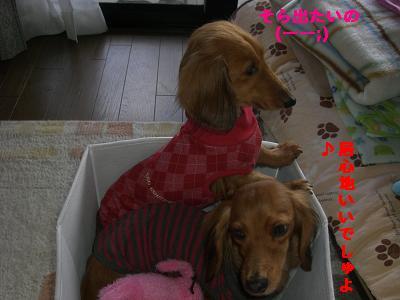 CIMG1015_20100126185158.jpg