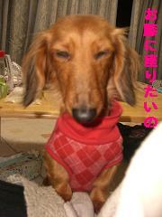 CIMG1036_20100129112757.jpg