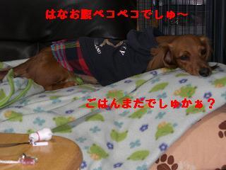 CIMG1054_20100528202938.jpg