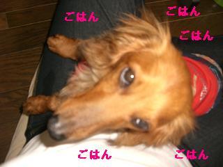 CIMG1055_20100528202824.jpg