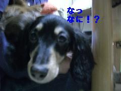 CIMG1073_20100201172111.jpg