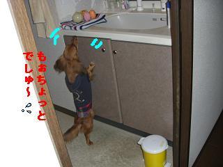 CIMG1073_20100527195442.jpg