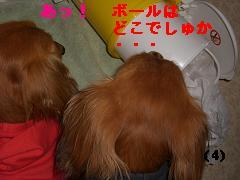 CIMG1078_20100527200040.jpg