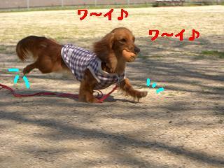 CIMG1090_20100530211221.jpg