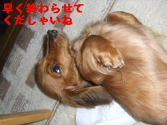 CIMG1091_20100131201248.jpg
