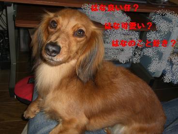 CIMG1115_20100202203613.jpg