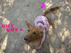 CIMG1123_20100603214113.jpg