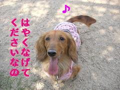 CIMG1128_20100603214138.jpg