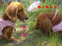 CIMG1133_20100603214426.jpg