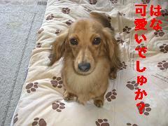 CIMG1151_20100604135328.jpg