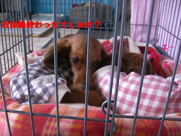 CIMG1154_20100207191713.jpg